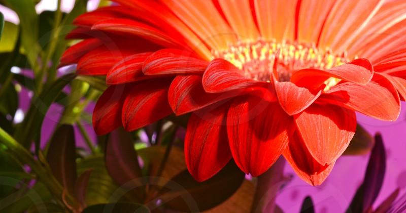 Petals of flower that has vibrant colors photo