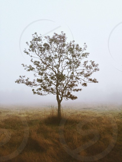 small tree on grassy field photo
