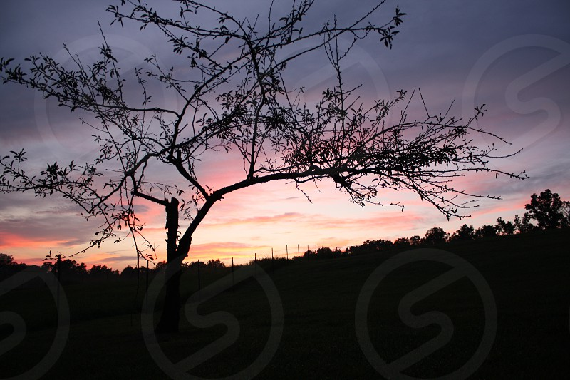 Silhouette of a tree photo