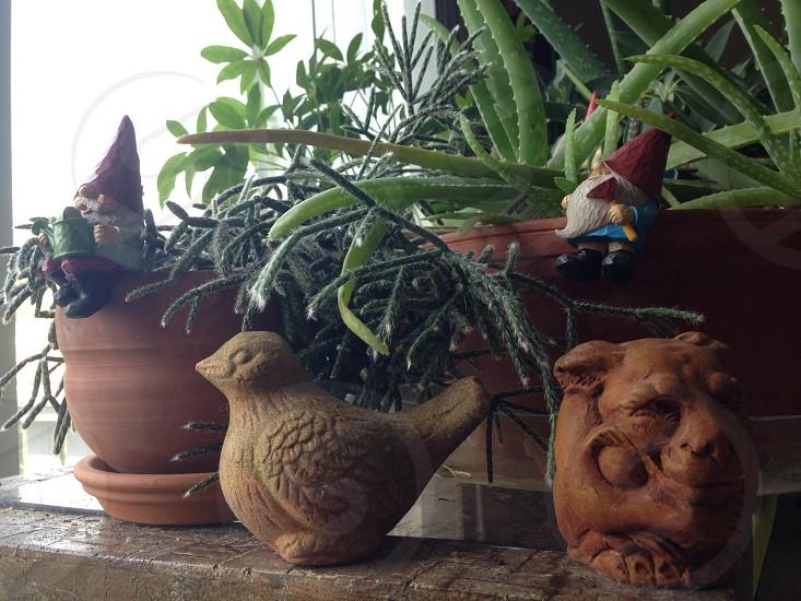 Indoor plants  photo
