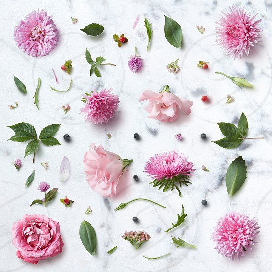 Seamless beautiful pattern of pink flowers on a white background photo