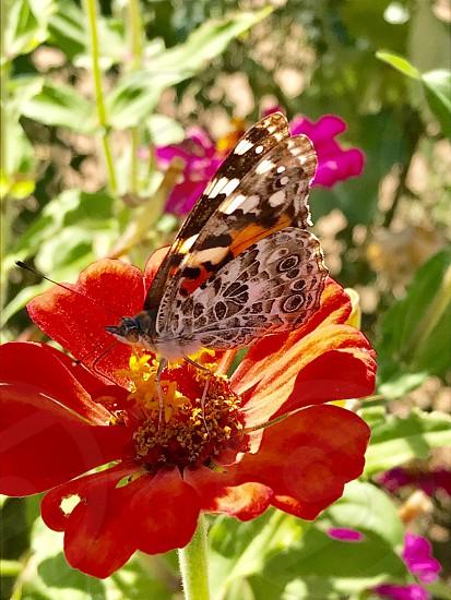 Desert flower butterfly color photo