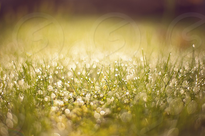 green grass macro photography photo