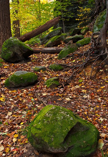 Autumn scenic. Fall. Boulders. Stones. Tree roots. Leaves. Color.  photo