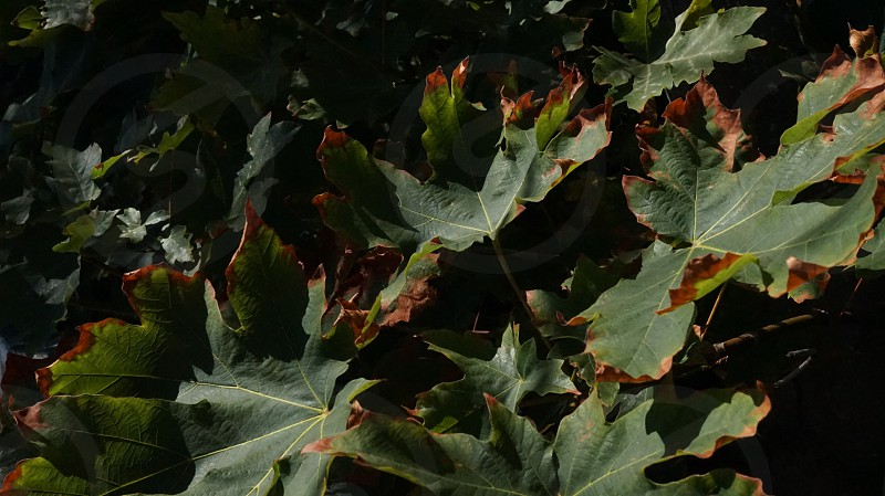 closeup photography of green and brown leaves photo