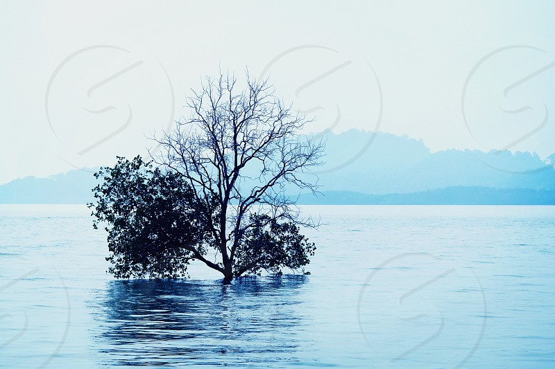 black mangrove surrounded by body of water photo