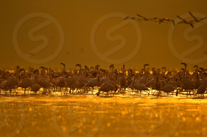 flock of birds on water in sepia image photo