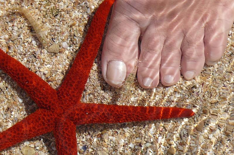 red star fish photo