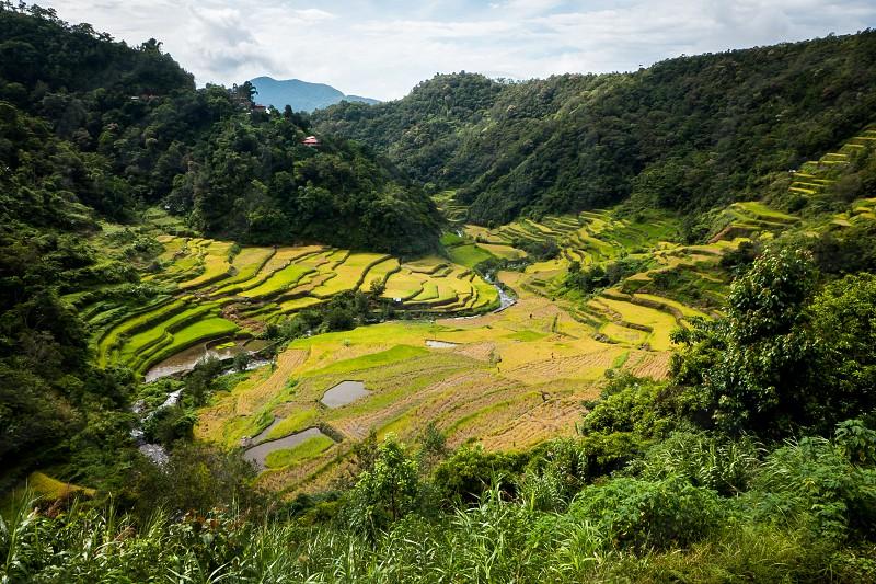 green rice terraces under white skies photo