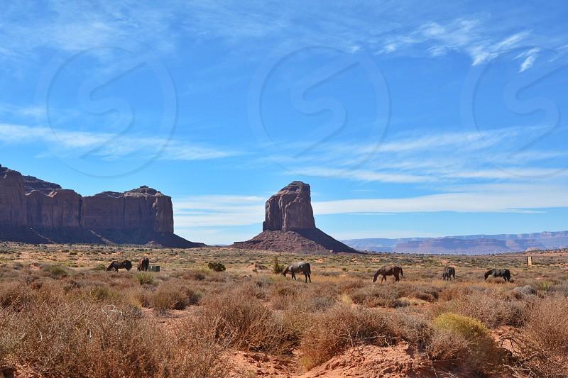Open range; horses; monument valley; Utah photo