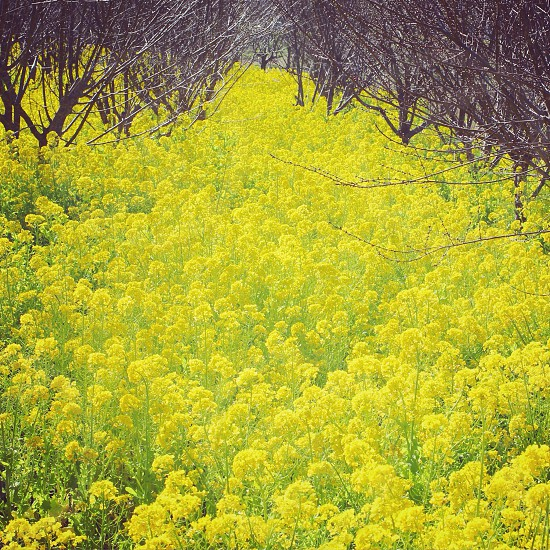 green bed of flowers with brown withered trees photo