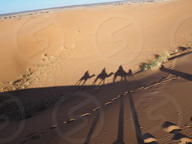 モロッコ サハラ らくだ 砂漠 photo