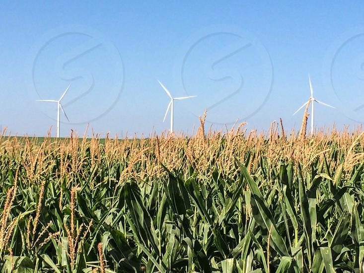 Wind turbines in a field of wheat photo