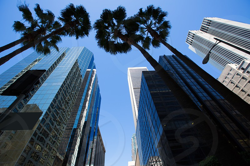 LA Los Angeles downtown with palm trees details on cityscape photo