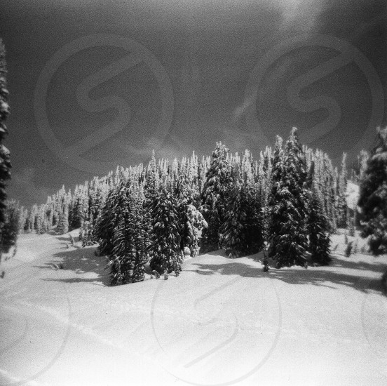 view of snow covered trees photo
