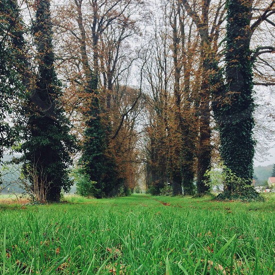 green grass under brown tall trees photo