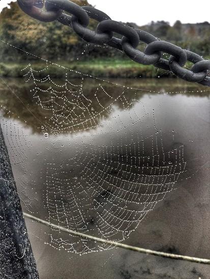Spiderwebspiders webdewautumnmorning  photo