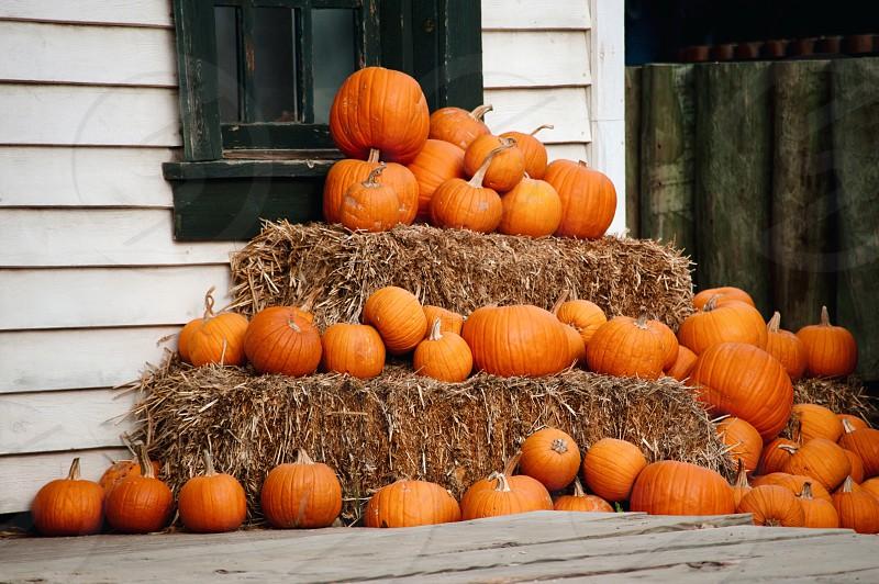 Halloween pumpkin costume pumpkin autumn autumn season pumpkin farm photo