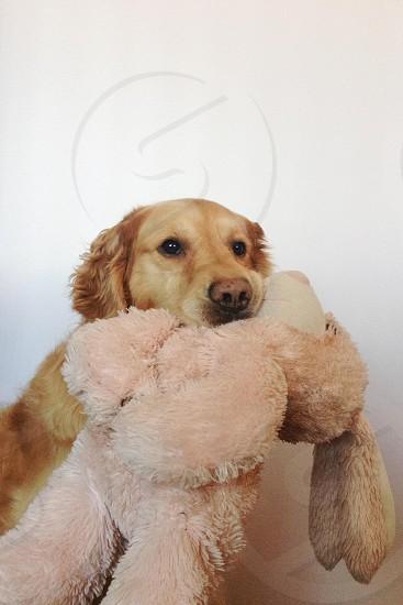 dog biting a rabbit plush photo