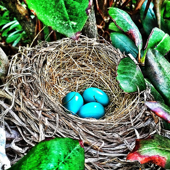 Robin's Nest - Dunstable MA photo