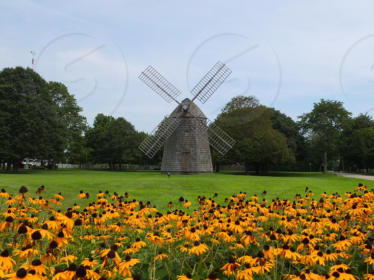 windmill in field with yellow flowers photo