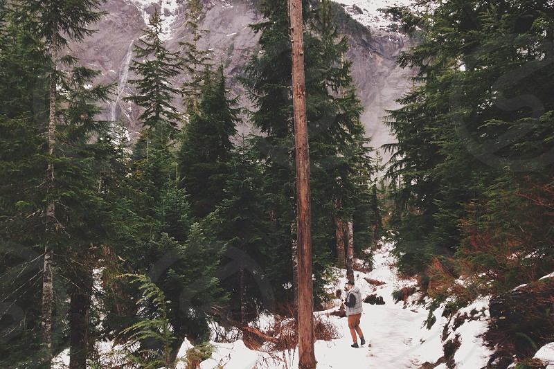 Forests and snow photo