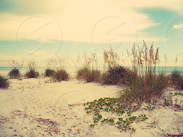 beach sand dunes grass florida vacation summer travel nature ocean  photo