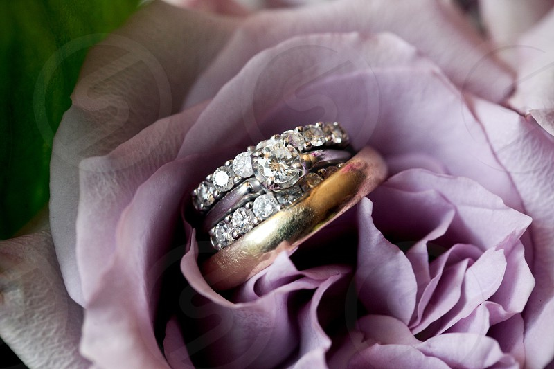 A closeup macro shot of wedding rings (diamonds solitaire gold white yellow band) sitting in the pedals of a purple rose. photo