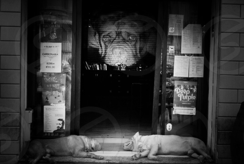 dog sleeping in front of door gray scale photography photo