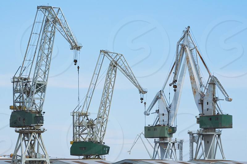 Four Giant Shipyard Cranes Against Blue Sky photo