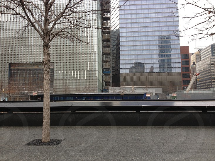 brown leafless trees across street viewing high rise buildings  photo
