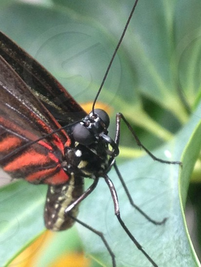 orange and black butterfly on green leaf photo