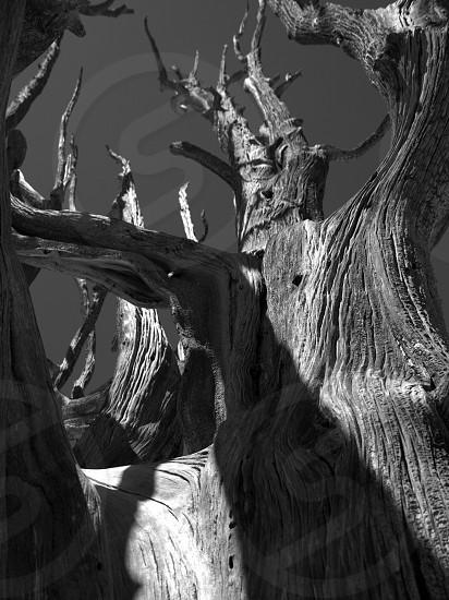 shadowplay petrified photo