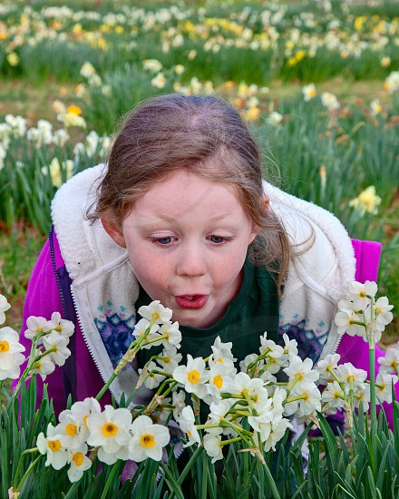 Young girl with daffodils  photo