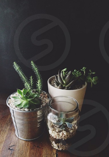 three planters with different succulents photo
