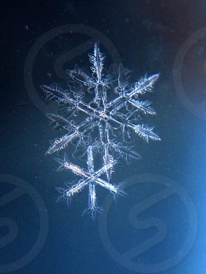 snow flakes photography photo