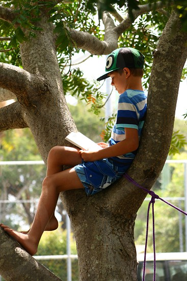 Boy reading in tree photo