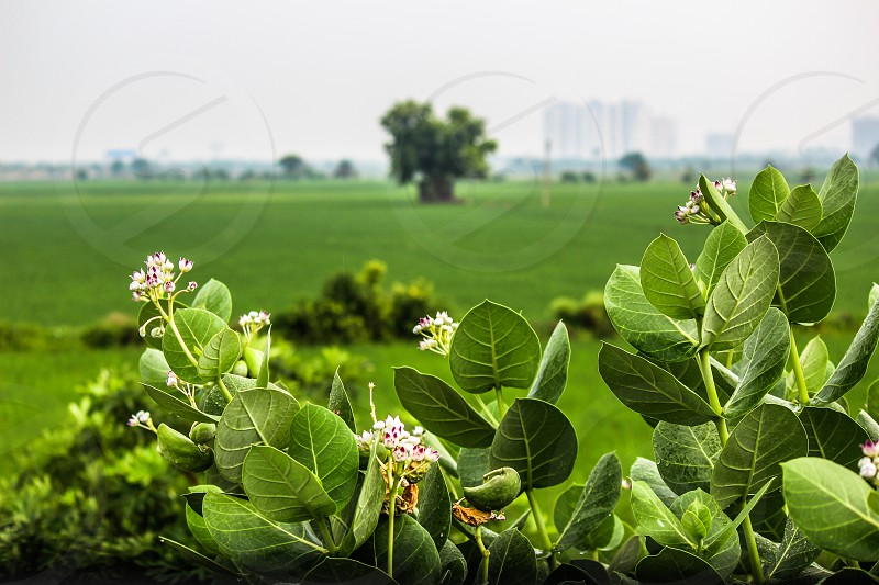 green mean nd green green leaves beautiful  landscape green landscape flowes lush green photo