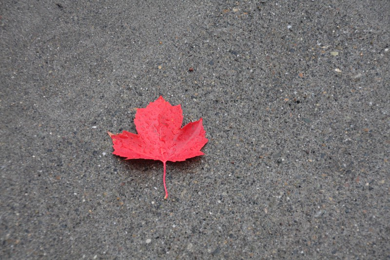 red leaf canada photo