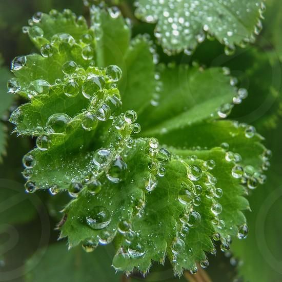 Leaf with dew... photo