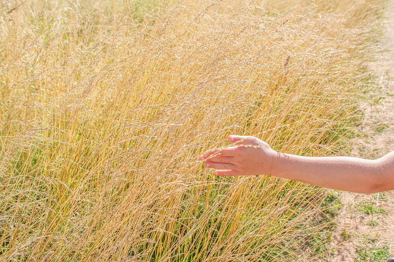The feel of tickley grass  photo