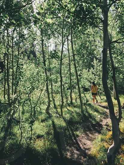 Hiking through lush green  photo