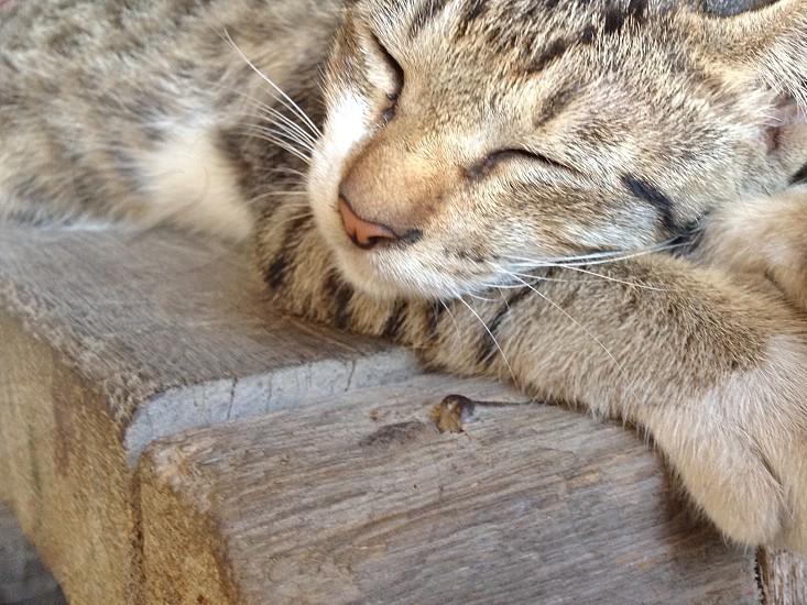 A sleeping kitten :) photo
