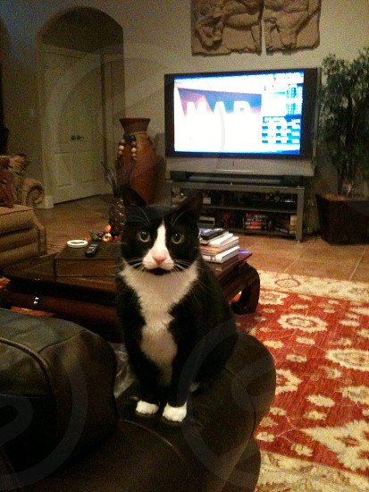 My old cat who looks like Sylvester!!! LOL!!! photo