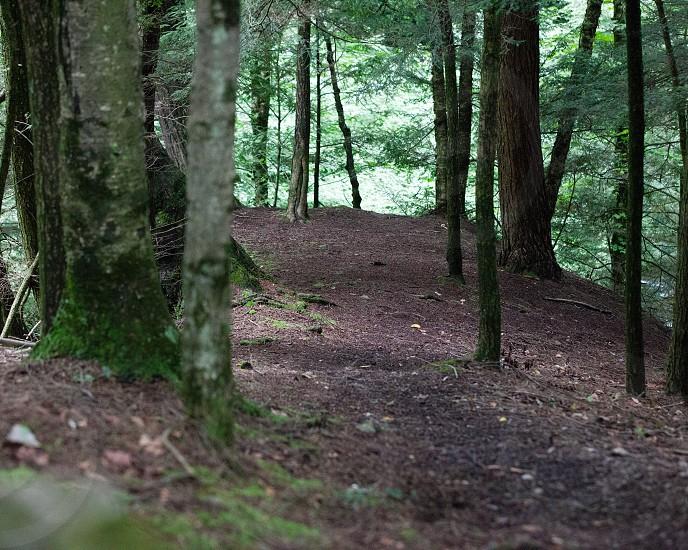 path; path to the edge; the edge; glen Fillmore Glen woods photo