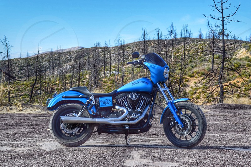 A blue Harley-Davidson dyna. This was taken in Angeles Crest highway surrounded by burnt trees.  photo