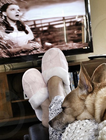 Watching an Old Movie with your Furry Friend photo