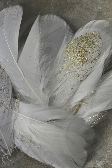 Feathers white glitter gold  photo