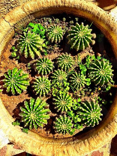 round green succulent plants on round brown ceramic pot photo