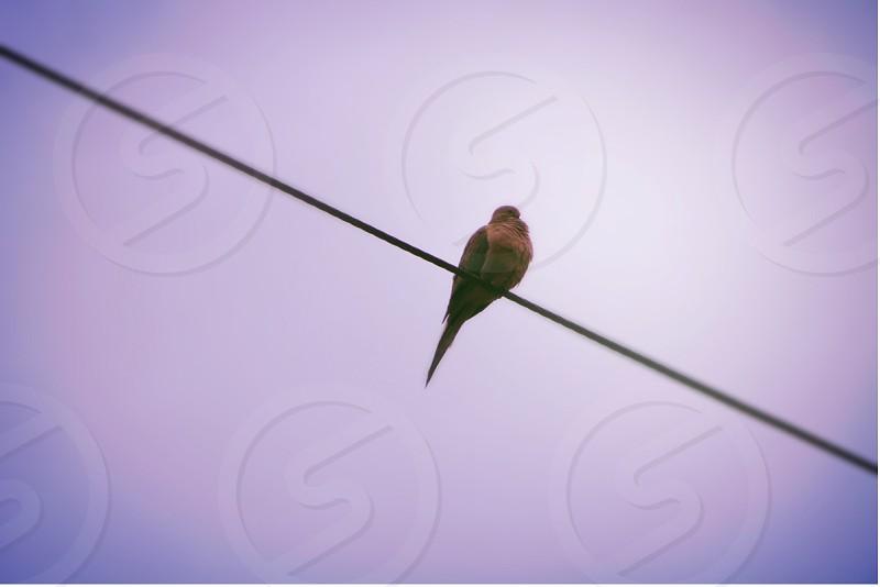 brown bird on wire photo